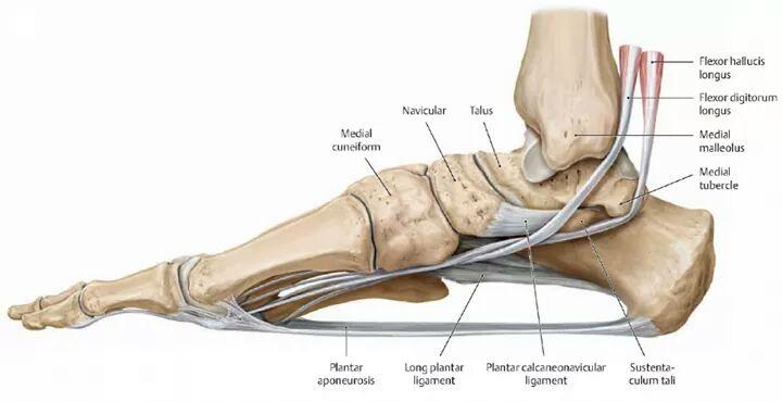 足の構造 5