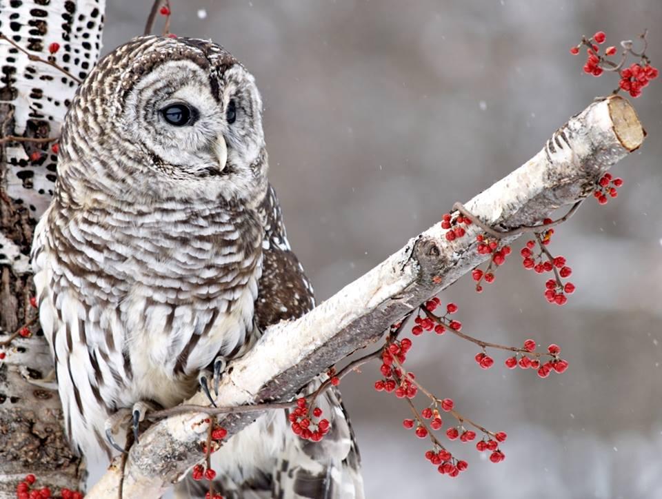 owls08
